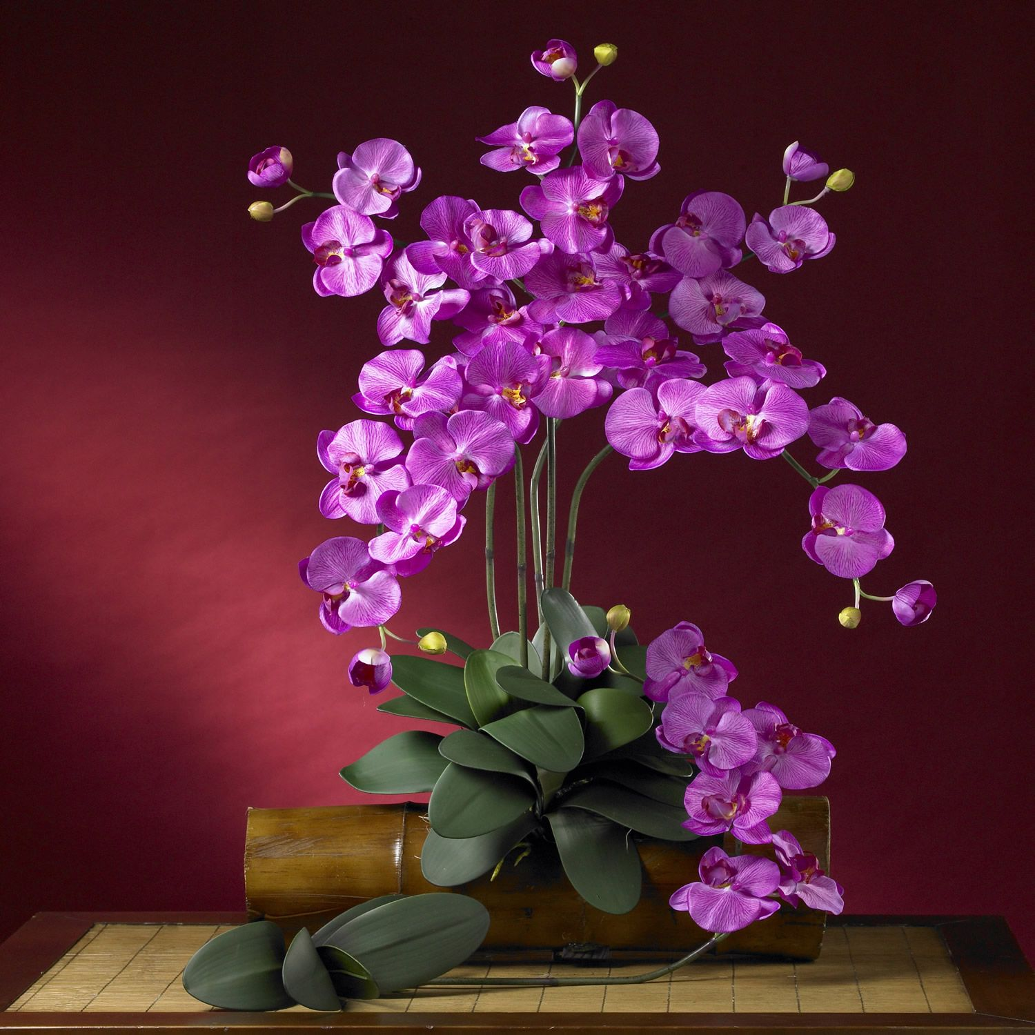 Astounding Orchid Flower Arrangement Ideas Of Gone Green Site Brighten Up Your Home