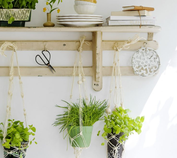 Ing Plants In The Kitchen Of Great Idea For Kitchen Hanging Herbs Under