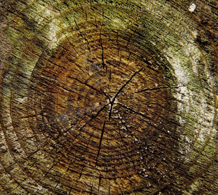 Exquisite Tree Stump Art Of Rock Plant Wood Texture Leaf Trunk Wall