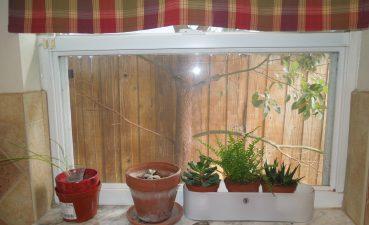 Kitchen Window Plants Of Dscn